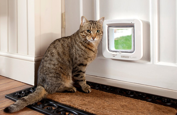 Transcat Dog Door Clear At The Glassman 2014 Ltd Expert Glaziers