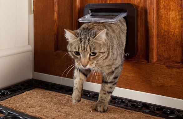 Electronic cat door amazon